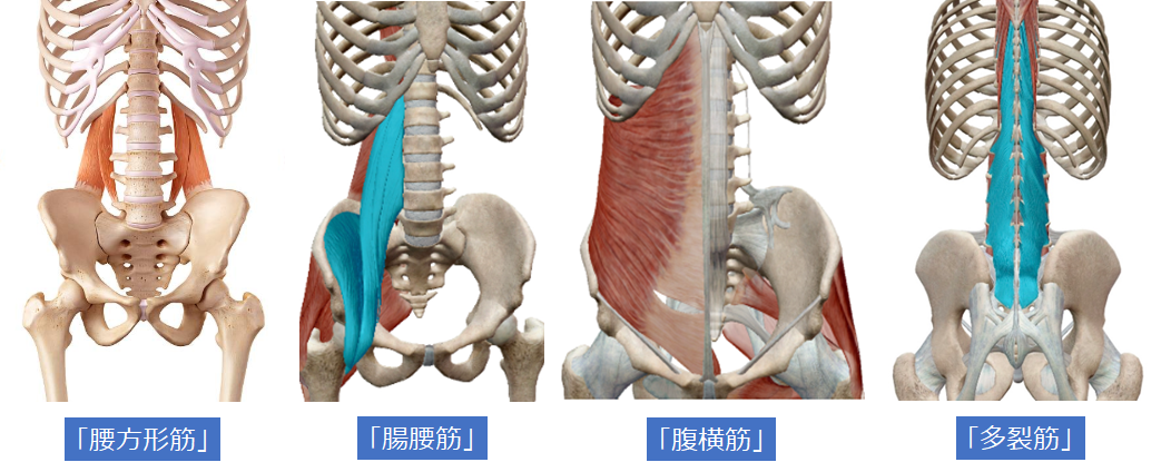腰のインナーマッスル